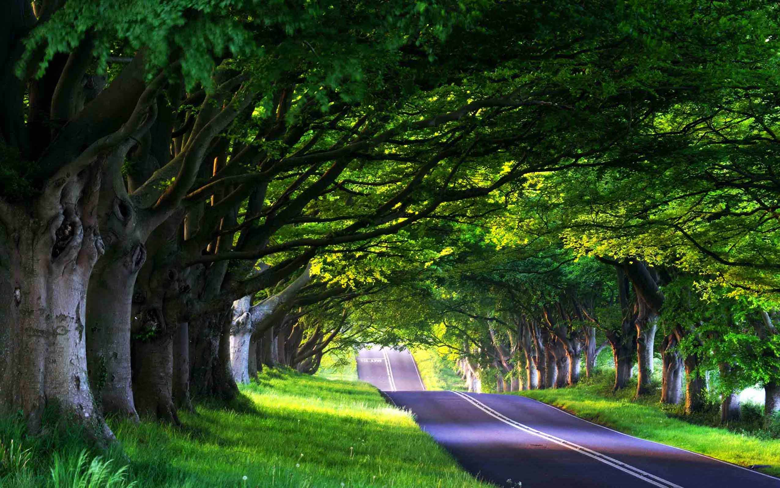 5291924-road-among-trees-wallpapers